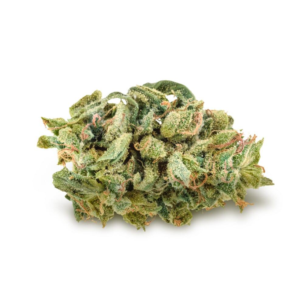 Blue Cheese Feminized Cannabis Bud