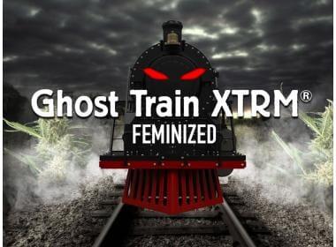 Ghost Train XTRM Feminized Strain: What Do I Need To Know?