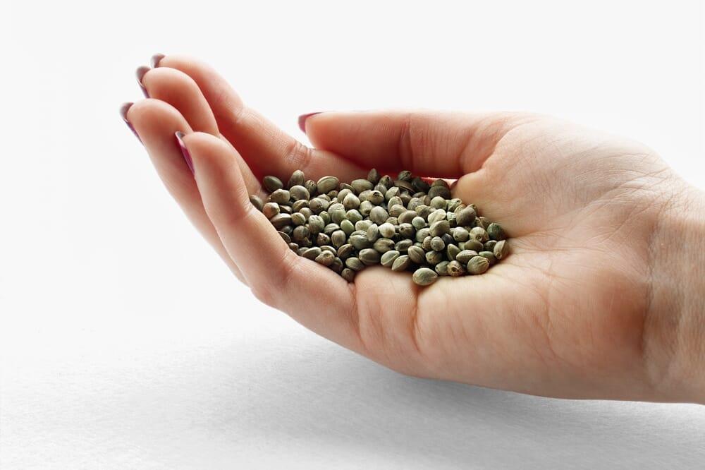AmsterdamMarijuanaSeeds - Seeds in hand
