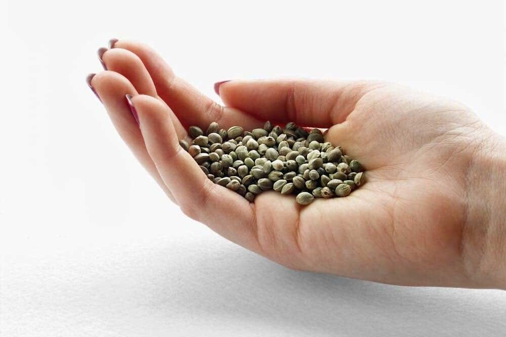 Hand of seeds