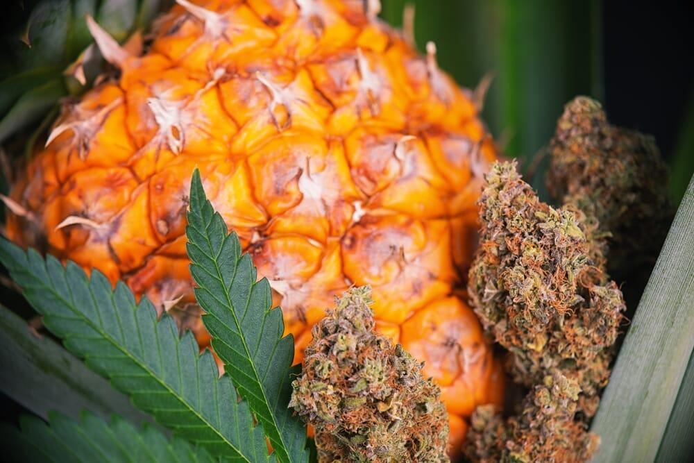 pineapple-kush-marijuana