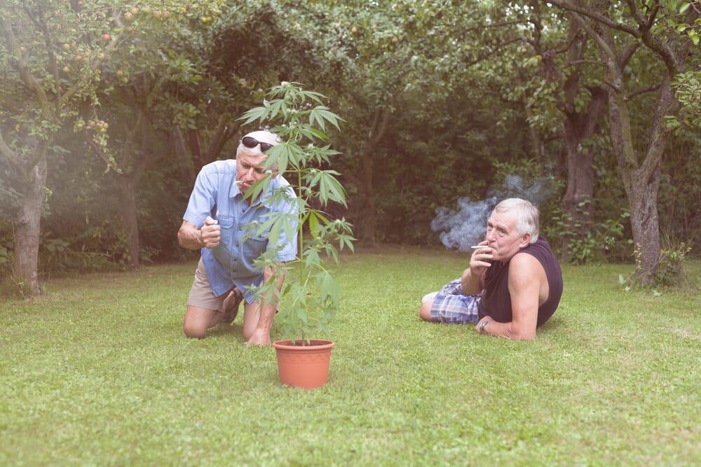 seniors_smoking_cannabis